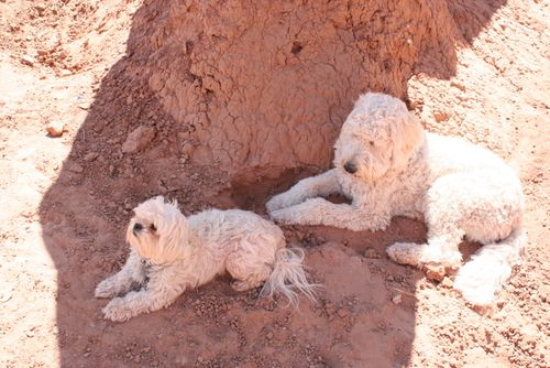 Sunningdogs